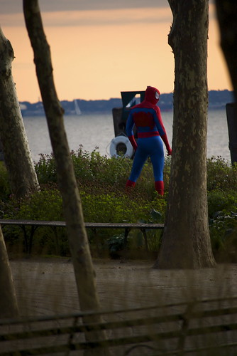 spiderman in the wild