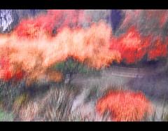 Fall impressions..movement IV (mcazadi) Tags: trees fall colors impressions movements golddragon impressedbeauty