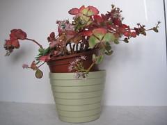 IMG_0138 (Plantules) Tags: