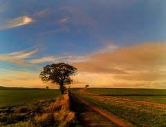 Autumn afternoon. (yamstar1) Tags: sky tree composition shropshire olympus 1001nights ruleofthirds leadin abigfave amazingshots rubyphotographer vanagram yamstar1