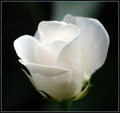 3059825966_16ac012c08_m - Happy Birthday Sir Benelynne! - Anonymous Diary Blog