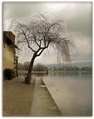 ~ Timeless ~ (*Marta) Tags: winter lake tree water river lago nikon bravo place d70 fiume reno svizzera rhein timeless f9 31mm 0003sec 0ev zarafa senzatempo hpexif damniwishidtakenthat creattivit violinoepianoforte superstarthebest