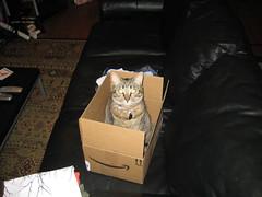 IMG_1694 (fadingembers) Tags: animals kitties bigpurplehouse