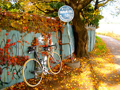 I've been tagged. (jinx) Tags: autumn color fall colors beauty bike bicycle yellow japan composition cycling leaf tour pentax tagged touring roadbike 16things