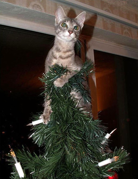 cat as a star on christmas tree