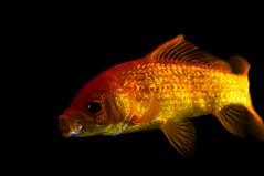fish nikon d90 nikon35mmf20