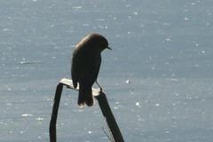 IMG_3920 copy (michalska1) Tags: birds spain wetlands humedal