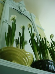 this morning's paperwhites (On Bradstreet) Tags: paperwhites californiapottery mccoypottery winterblooms vintagepottery sfgirlbybay americanpottery indoorgardens forcingbulbs italianateinteriors eastlakemantle