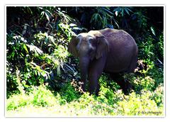 (Diji's Photography) Tags: india closeup canon eos sigma kerala dslr 18200 dfc 400d malayalikkoottam kfm3 malayalikkottamkfm3