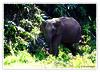 (Diji's Photography) Tags: india closeup canon eos sigma kerala dslr 18200 dfc 400d malayalikkoottam kfm3 malayalikkottamkfm3 കാട്ടാന
