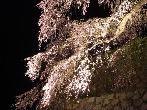 又兵衛桜(ライトアップ)-07