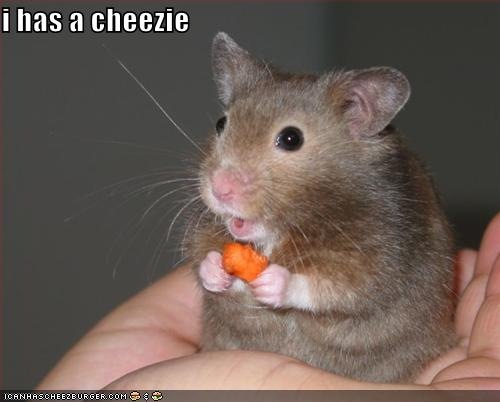 funny-pictures-mouse-has-cheese