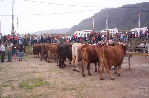 San Antonio Abad 2008 - Buenavista