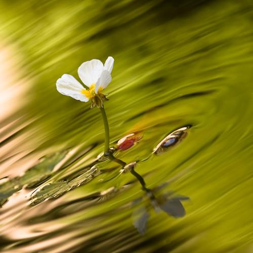 White water flower II by VictorMk1.