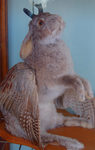 winged jackalope (rabbit with antlers and wings)