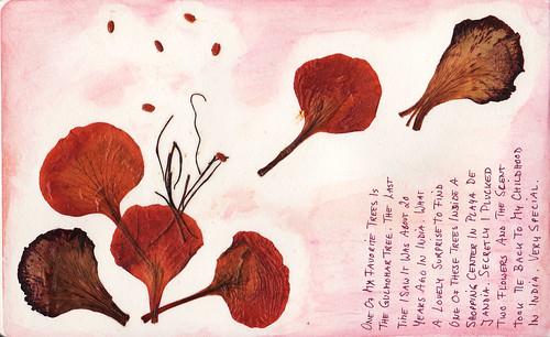 Gulmohar Flower Petals
