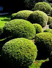 azaleas.jpg (lao_ren100) Tags: japan garden kyoto tofukuji zen round azalea sesshu kaisando laoren100 fumoin