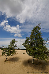 Drunense duinen (explored) (Jan Linskens) Tags: netherlands landscape nederland brabant landschap drunenseduinen 1020sigma flickrestrellas janlinskens vanagram