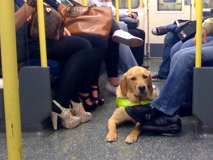 Guide Dog on Tube by ash matadeen