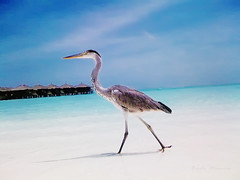 Catwalk by Heron 1600pixel by 1200pixel