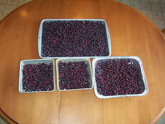Saskatoon berries in pans ready to cook