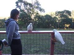Perched On Food (KAPOWE!) Tags: jackie lorne