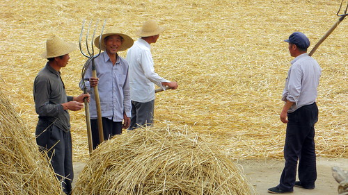 Locals sorting the hay out near Chingning, Gansu Province, China