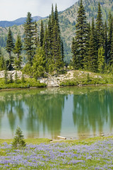 Mountain Tarn (Jeff Holland) Tags: lake reflection water washington tarn chinookpass nikkor70300mmf456g dsc6277