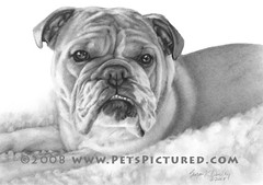 Allie, English Bulldog, Graphite Portrait by Susan Donley