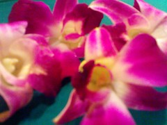 Orchid (fatningchen) Tags: