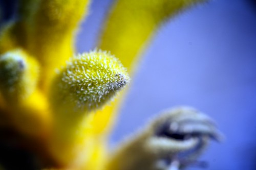 Fuzzy Yellow