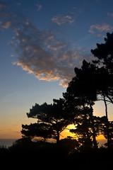 Sunrise through the Trees (Colin_E) Tags: trees sea sky mer france color colour silhouette clouds sunrise dawn coast brittany bretagne breizh cotesdarmor larcouest
