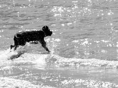 The Joy And Simplicity Of A Splendid Day (marni*) Tags: dog blackwhite simplicity tgif beautifulday oneofthose marni~ ilikeitmoments