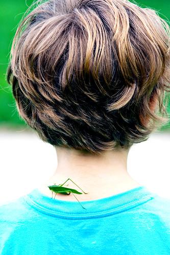 Grasshopper: Day 78