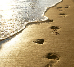 Footprints (jami_lee) Tags: ocean sea beach water sand alone footprints award goldstar oceanshore flickrchallengegroup flickrchallengewinner theunforgettablepictures goldstaraward beginnerdigitalphotographychallengewinner thechallengefactory goldenmasterpiece