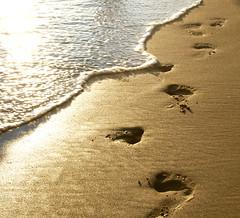 Footprints (jami_lee) Tags: ocean sea beach water sand alone footprints award goldstar oceanshore flickrchallengegroup flickrchallengewinner theunforgettablepictures goldstaraward beginnerdigitalphotographychallengewinner thechallengefactory goldenmasterpiece