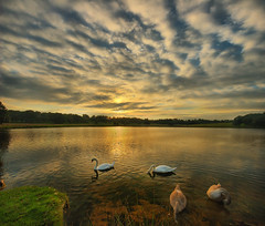 Sunset at Tatton Park, Manchester (Vertorama) (i.rashid007) Tags: uk sunset lake manchester horizon swans hdr tatton tattonpark vertorama wwwtattonparkorguk