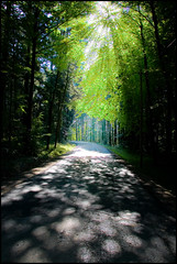Road to light (gato-gato-gato) Tags: road wood trees light sun tree green forest licht interestingness explore grn sonne wald bume baum teer flickrexplore strase explored tamron1750mmf28 canoneos400d gatogatogato gatogatogatoch