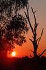 Dutch Landscapes - bare tree @ sunset (lambertwm) Tags: sunset tree netherlands dutch landscape zonsondergang bomen utrecht tramonto sonnenuntergang nederland boom pôrdosol árbol puestadesol albero arbre árvore hilversum 日落 baum träd landschap viewcount crepúsculo puestadelsol coucherdusoleil غروب 日没 غُروب، مَغيب lwmfav