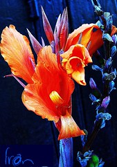blue mood (framajo) Tags: street door blue orange france flower fleur colors mood bleu porte 1001nights rue laval soe picnik humeur granderue diamondheart citritbestofyours cherryontopphotography thebestpicturegallery fabulousflicks framajo naturescreations