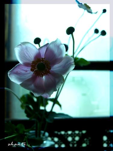 Flower of Life.