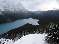 Peyto Lake (Fer A) Tags: mountain toronto canada mountains jasper montreal victoria banff athabaska