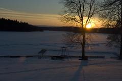Photographer Michael Folmer (Michael Folmer) Tags: sol michael vinter sverige landskap upplandsväsby badstrand sön motljus uppland kväll folmer kvällssol solnedgng abcpress abcpressse