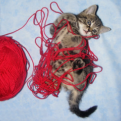 Small kitten, big yarn (Julia-D) Tags: cat kitten yarn cc100