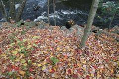2008_10_13_brookline-nh_03 (dsearls) Tags: footbridge coveredbridge brookline bikeway brooklinenh nissitissit anthropocene nissitissitriver 20081013