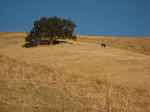Cow & Tree