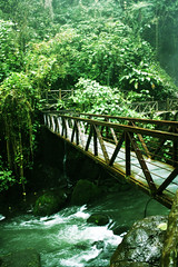 Costa Rica Rain Forest Bridge (The One and Only Jet Guer) Tags: