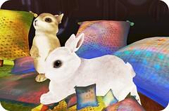 Giant Rabbits (hideki.aeon) Tags: life giant happy mood secondlife second rabbits oillows