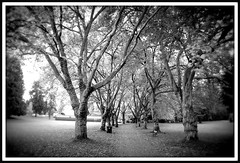 Cathedral of Trees (Mark Faviell Photos) Tags: park autumn trees bw fall vancouver bc fave stanley abigfave bwartawards