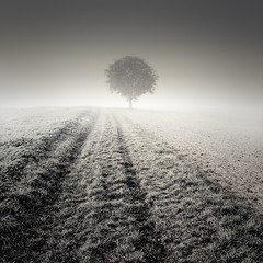 Lonely (Martin Gommel) Tags: snow cold tree field grass lines one open martin wideangle single desaturation saturation lonely singletree oneness kwerfeldein martingommel epiceditsselection